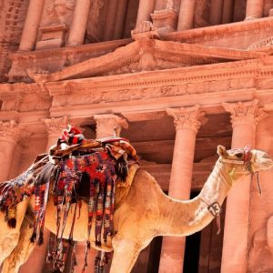 Camel in christian tours in petra